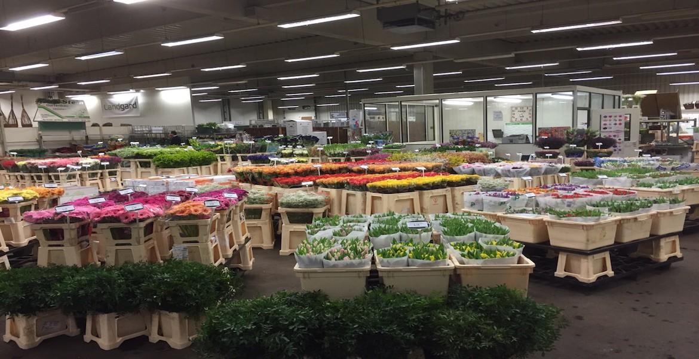 Blumen Großhändler