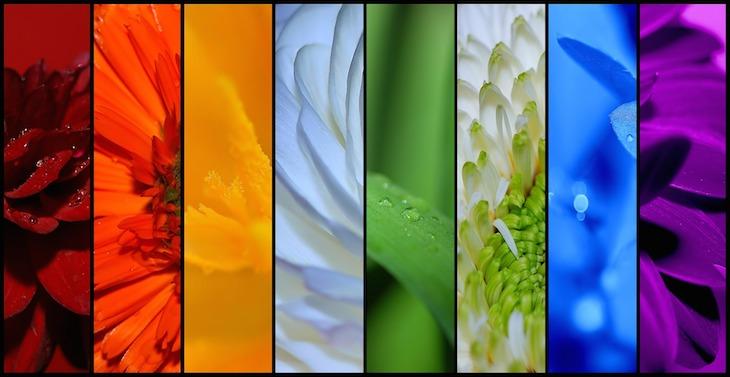 farben der rosen
