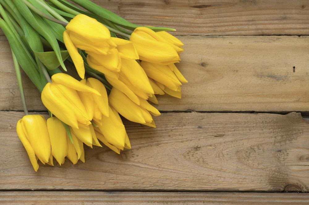 gelbe tulpen bedeutung
